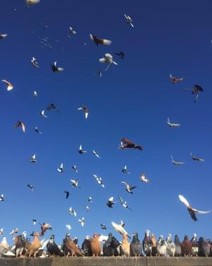 Pigeons over Bushwick, Brooklyn
