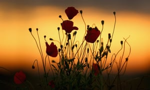Wild poppies grow near Tyne Cot Military Cemetery as dawn breaks on the centenary of the outbreak of the Great War on 4 August 2014 in Passchendaele, Belgium.