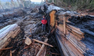 The aftermath of logging in Tasmania