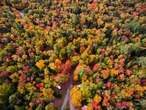 Autumn trees in the Adirondacks