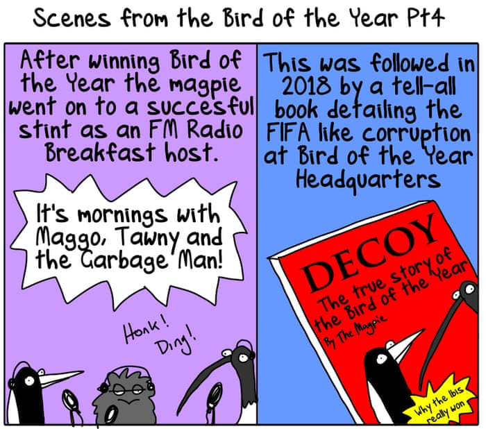 Magpie wins Australian bird of the year poll – as it
