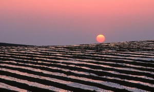 A strawberry farm at sunset in Huelva.