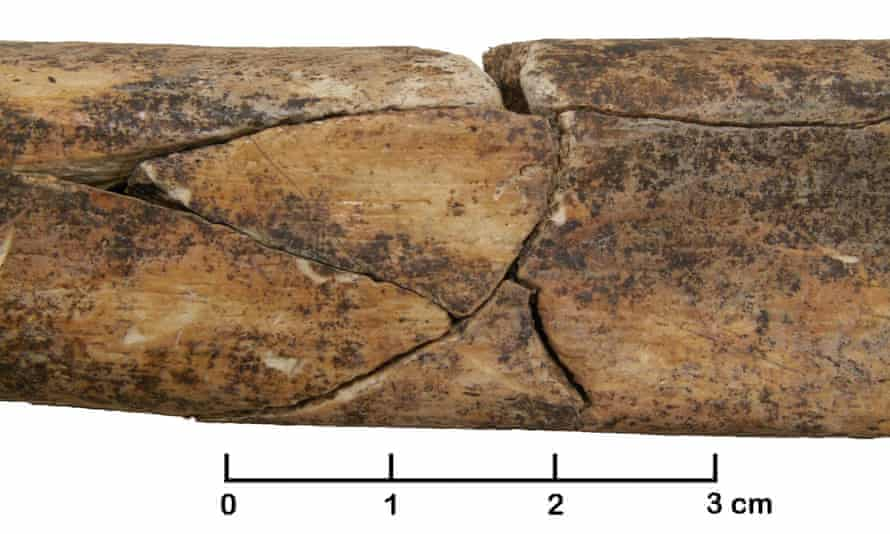 A fractured adult shin bone from the mass grave, which could indicate torture or posthumous mutilation.