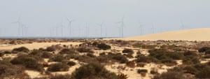 Tarfaya's windfarm features 131 turbines.