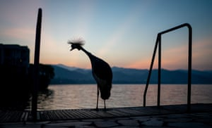 A crane stands on the shore of Kivu, on the border between the Democratic Republic of the Congo and Rwanda