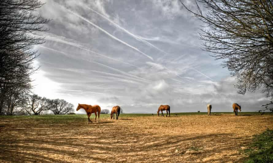 horses in a field.