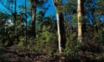Queensland nature refuge program 'at breaking point', report warns
