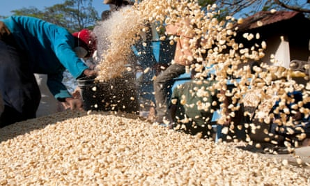 Man shovelling maize corn into a pile in Tanzania