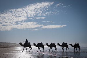 Camels are taken for a walk through the surf in Essaouira, Morocco