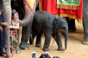 An elephant at Nong Nooch Garden, Thailand.