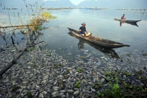 Agam, Indonesia: fishers paddle among dead fish at Maninjau Lake in West Sumatra province