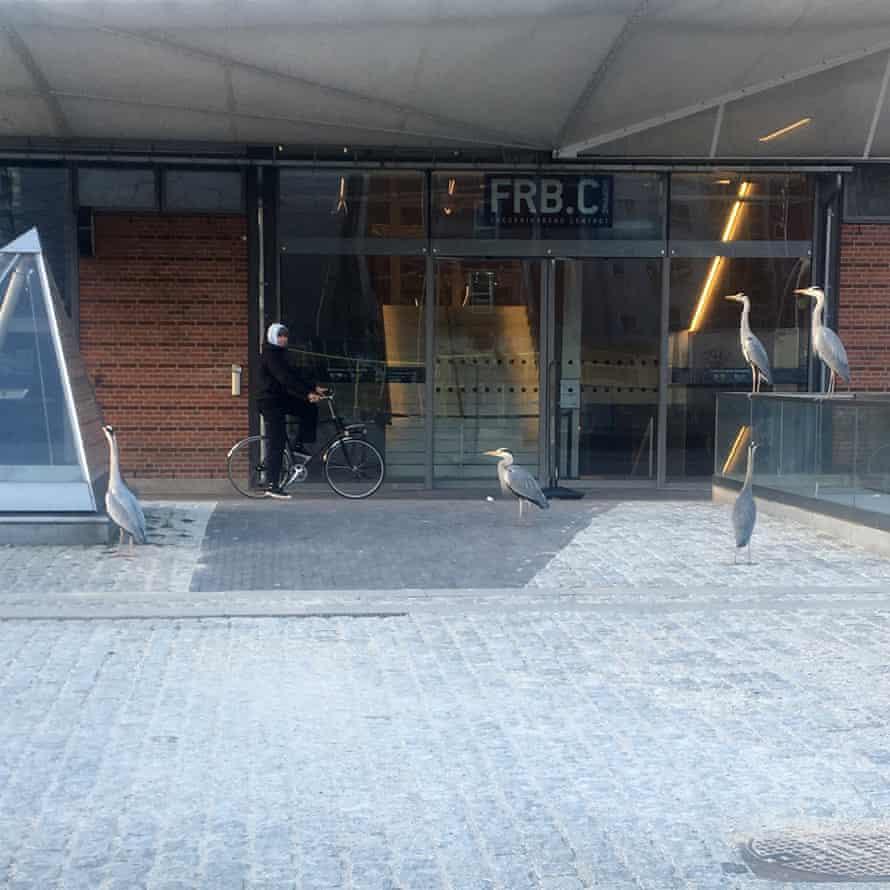 Herons attempting to shop for essentials in Copenhagen.
