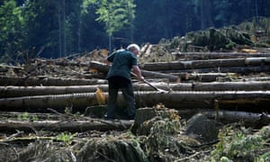 A forester scrapes the bark of a beech tree to control pests in a forest suffering from drought stress in Hoexter, western Germany.