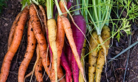 How to grow your own veg: a beginner's guide