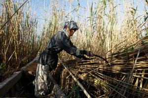 Abu Sabah, a Marsh Arab, cuts down reeds at the Chebayesh marsh in Nassiriya, 300km south-east of Baghdad, February 15, 2013.