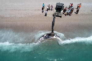 Drone photo shows heavy machine removing a the body of a three-metre whale washed ashore in Mugla, Turkey