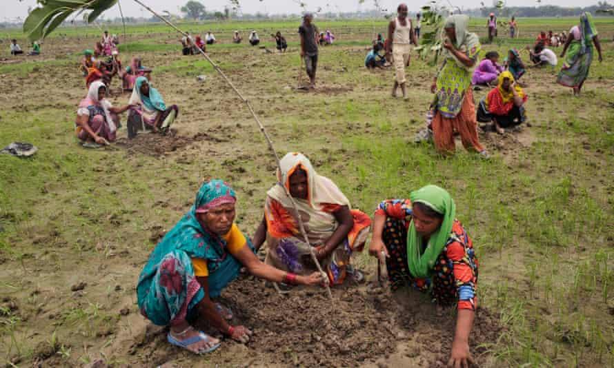 Trees company: Indian women plant saplings on the outskirts of Allahabad, Uttar Pradesh.