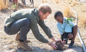 Prince Harry helps to plant trees at the Chobe Tree Reserve in Botswana