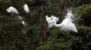 Egrets in Xiangshan forest park in Nanchang, capital of Jiangxi Province, China