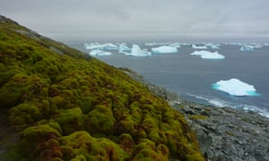 Cores drilled from three islands just off the Antarctic peninsula reveal that the warming climate has spurred on biological activity.