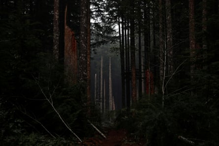 Trees are seen damaged during. the aftermath of the fires in Clackamas county, near Molalla, Oregon, on 16 September.