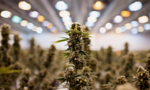 Paul Isenbergh pays at least $4,000 a month for electricity to grow cannabis.