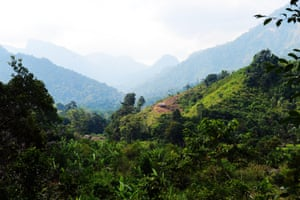Forest cultivated by local villagers near Marojejy national park in northeast Madagascar