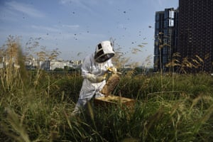 An apiculturist collects honey in a beehive on the roof of the Beaugrenelle shopping centre in Paris