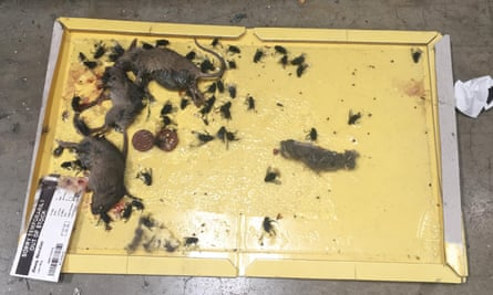The dead mice were found in the bread section of the depot in Enfield during an inspection in May.