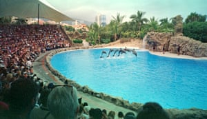Performing dolphins.