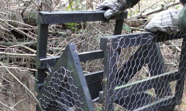 Scottish gamekeeper who killed protected birds of prey avoids jail