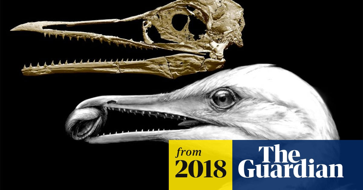 Fossil Sheds Light On Evolutionary Journey From Dinosaur To Bird Science The Guardian