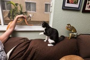 Snake, cat, and squirrel monkey, Boynton Beach, FL, 2014