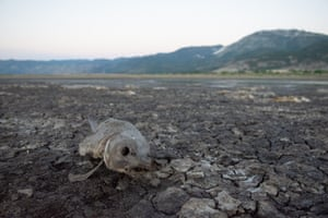 A dead fish on the dry lake bed of Little Washoe Lake in Washoe City, Nevada. According to the Nevada Department of Wildlife the lake dried up because of prolonged drought. Water levels were also adversely affected by a 2017 storm that washed out a diversion on Brown's Creek