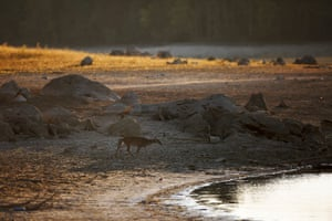 A deer walks towards a receded Lake Purdy where water levels have dropped several feet due to a sever drought, in Alabama, US