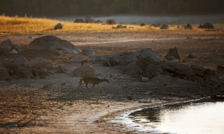 A deer investigates the shoreline of a receding lake in Alabama as the drought continues.