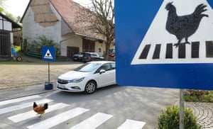 A chicken walks on a zebra crossing marked with a special sign in Ertingen, Germany. A local resident has set up the crosswalk for the chickens of a neighbouring farm, as the animals cross the road regularly to drink from a village fountain on the other side of the street