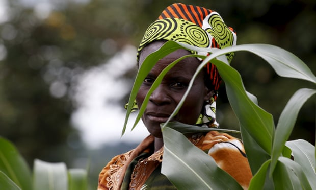 A farmer surveys her maize fields in Dowa near the Malawi capital of Lilongwe, 3 February 2016.