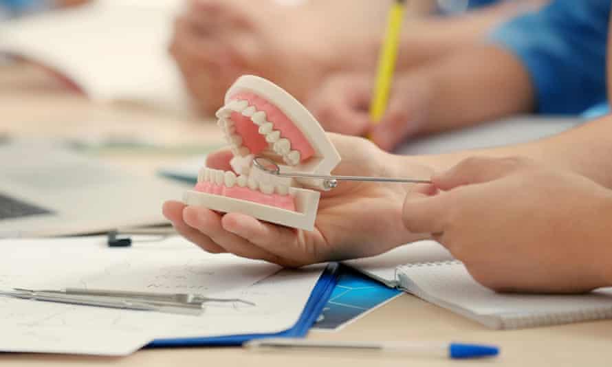Student holding dental jaw model