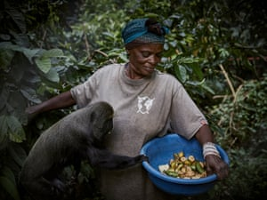 Primate caretaker Amisi Ndukura feeds Maisha, a Hamlyn's monkey, at Lwiro Primate Centre
