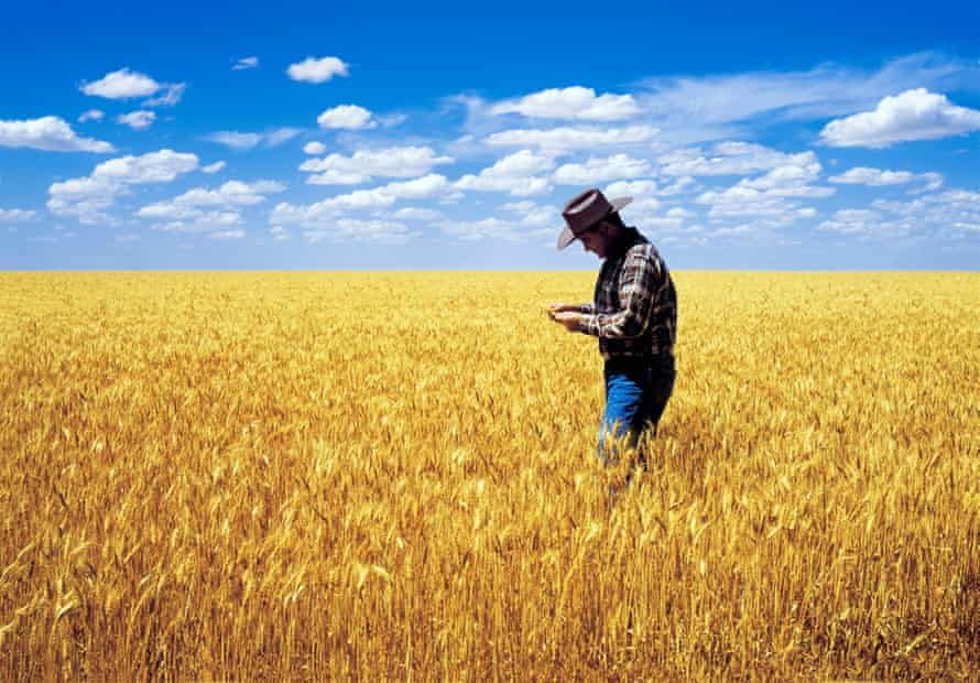 A wheat farmer checks his crop at Warracknabeal, in Victoria's Wimmera region.