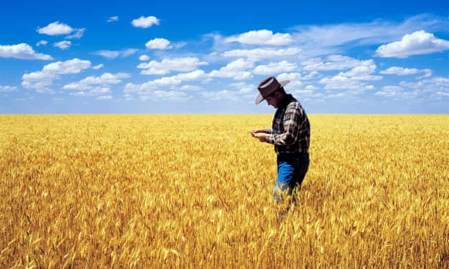 Australian wheat farmer