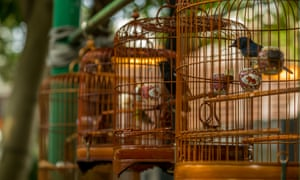 Birds in cages hanging at the Bird Garden and Market in Yuen Po Street, Mong Kok.