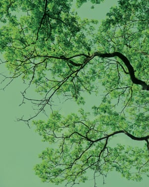 Image of tree branches