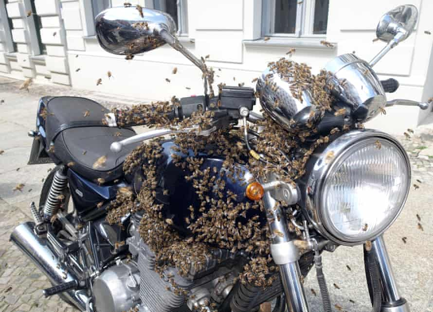 Berlin Kreuzberg, A swarm of bees cluster on a motorcycle.