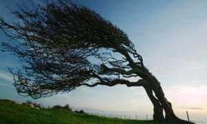 'A place made for ghost stories' … tree silhouetted at dusk on Humphrey Head Point, Cumbria.