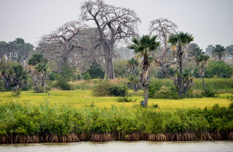 Gambia river seen from a boat