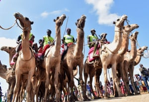 Maralal, KenyaParticipants wait at the start of the 21 kilometer professional camel race during the 29th edition of Maralal International Camel Derby at , Samburu County, Northern Kenya.