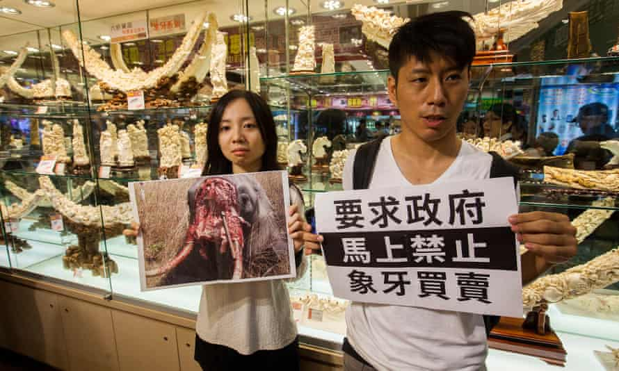 Activists allege Hong Kong's legal trade in ivory is providing cover for newly poached ivory from illegally killed African elephants to enter the market