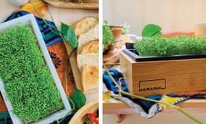 Hamama product on diplay in a kitchen with greens growing in it.